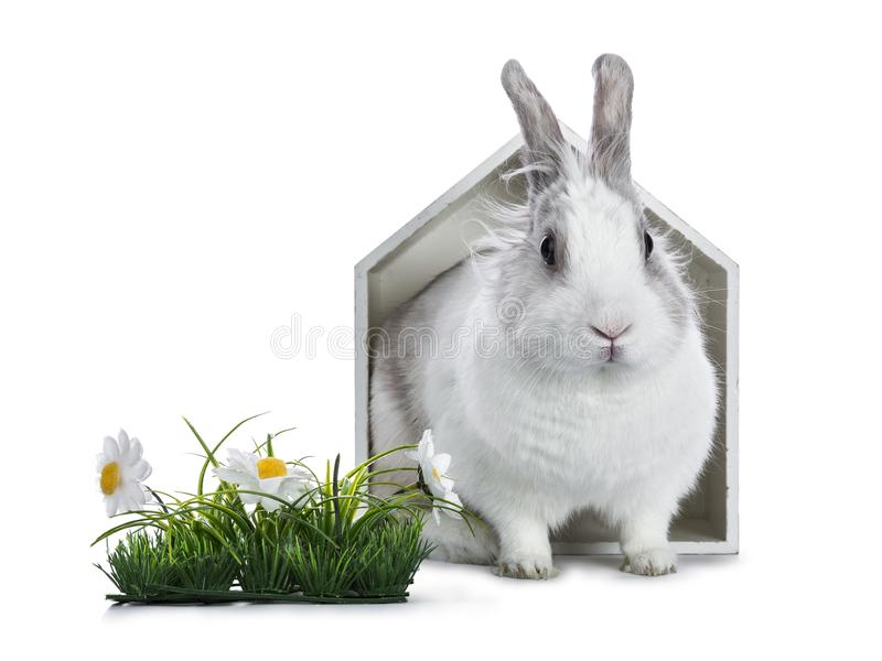 Leuk wit met grijs konijn royalty-vrije stock afbeeldingen