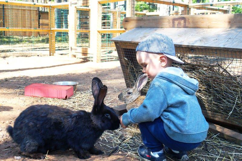 Leuk wordt weinig jongen die van een zwart konijn op de hoogte brengen, wil hem strijken stock afbeelding