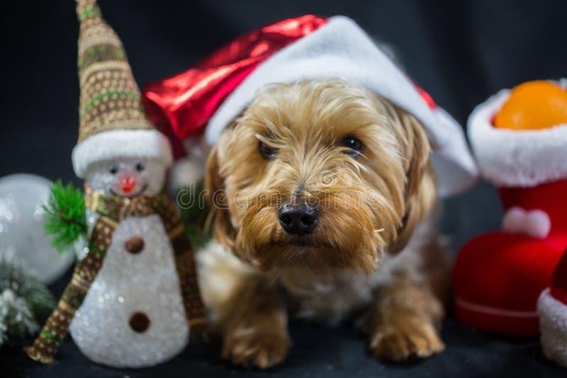 Leuk Yorkshire Terrier met sneeuwman royalty-vrije stock afbeelding