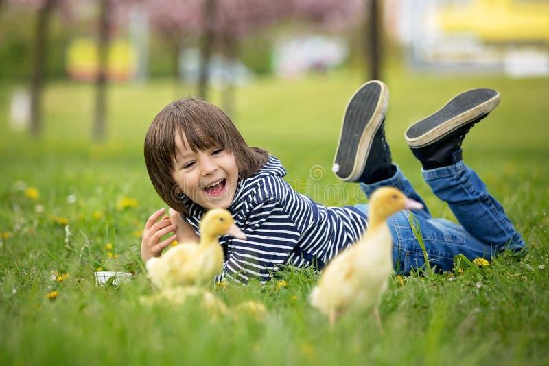 Leuk zoet kind, jongen, die in het park met eendjes spelen royalty-vrije stock afbeeldingen