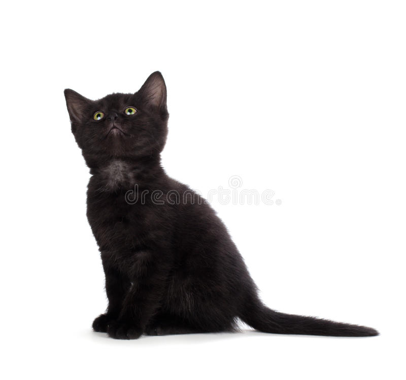 Leuk zwart die katje op een witte achtergrond wordt geïsoleerd royalty-vrije stock afbeeldingen