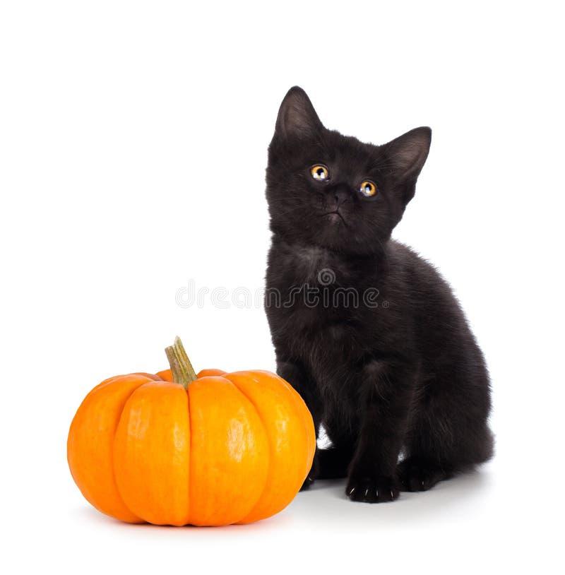 Leuk zwart katje naast een minidiepompoen op wit wordt geïsoleerd stock foto