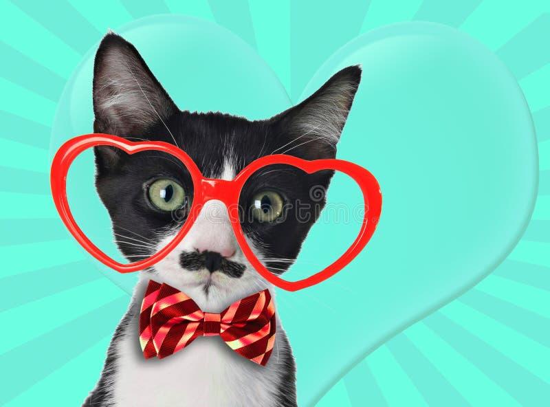 Leuk zwart-wit katje met snor en vlinderdas royalty-vrije stock foto's