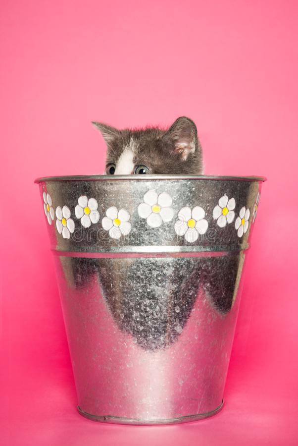 Leuke babykat die uit bloempot op roze achtergrond plakken stock afbeeldingen