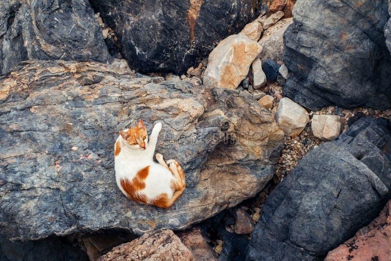 Leuke bruine en witte kattenzitting op rotsen royalty-vrije stock afbeeldingen
