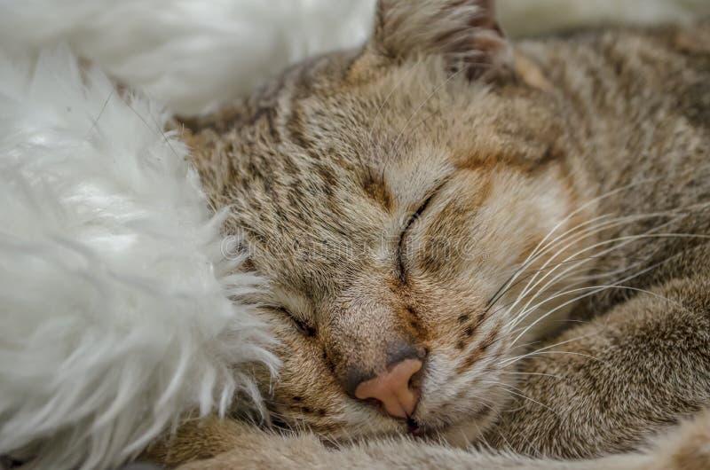Leuke Cat Sleeping Cat royalty-vrije stock afbeeldingen