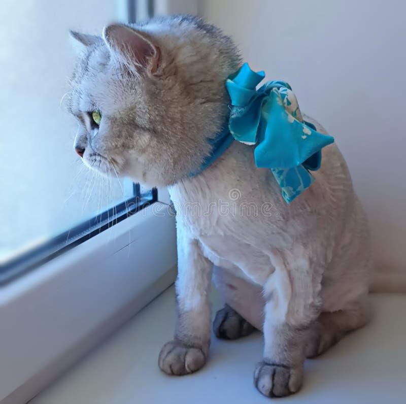 Leuke Cat Waiting Spring op vensterbovenkant Grappige Potkat, Leuke dieren stock afbeeldingen