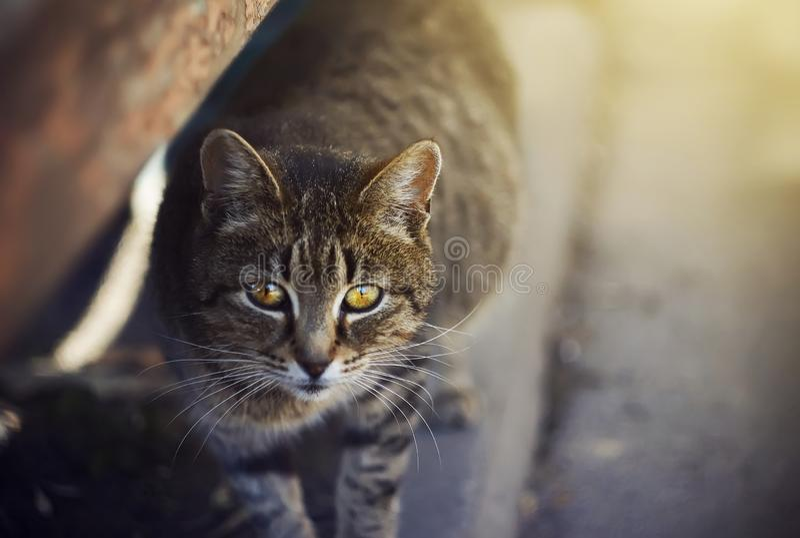 Leuke dakloze kat met gele ogen die zich op de bestrating bevinden royalty-vrije stock foto