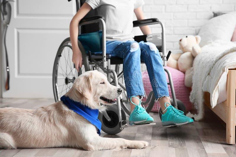 Leuke de diensthond die op vloer dichtbij meisje in rolstoel liggen stock fotografie