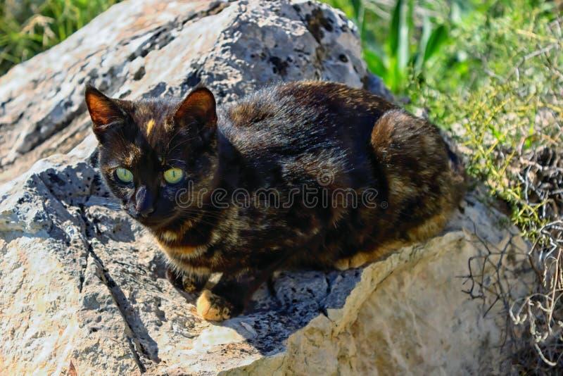 Leuke de kleurenzitting van de katjesschildpad op een steen De kat heeft heldere gele ogen stock afbeelding