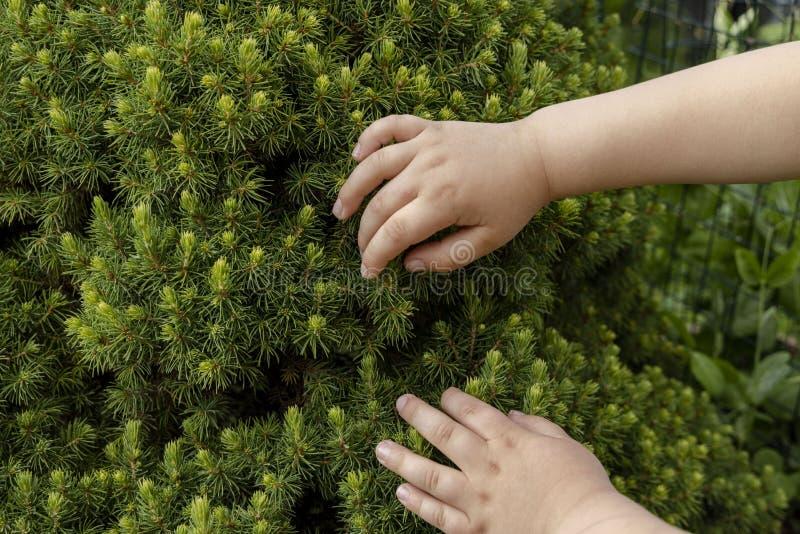 Leuke dichte omhooggaande mening van de handen die van het kind groene boom taching Mooie groene aardachtergronden stock afbeeldingen