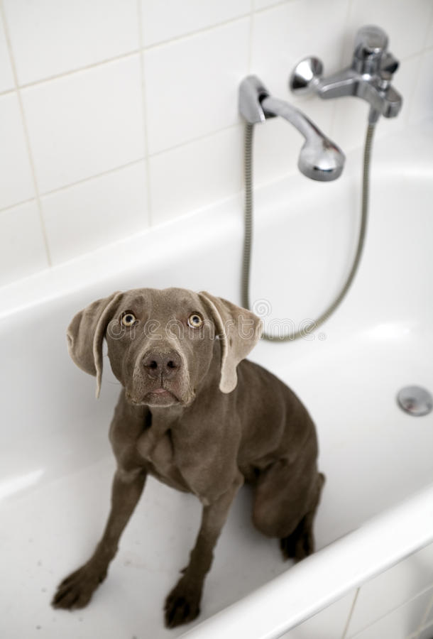 Leuke die hond in een bad wordt gezeten royalty-vrije stock fotografie