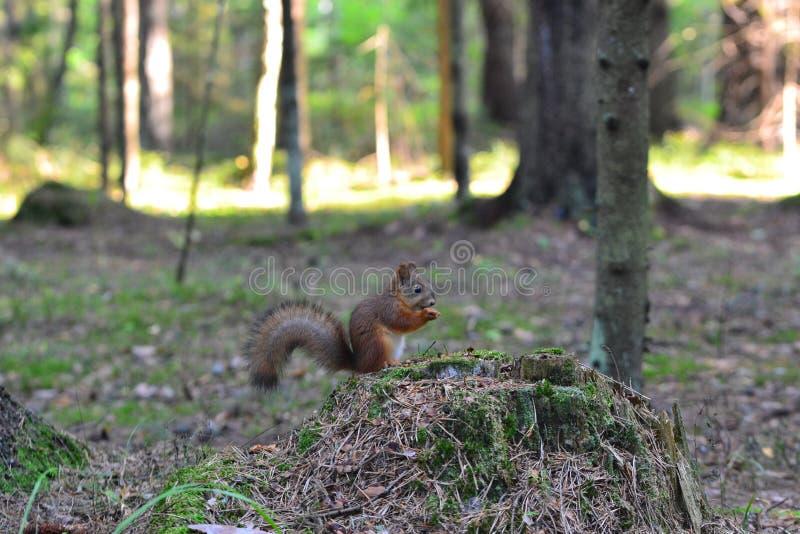Leuke eekhoorn in park het eten royalty-vrije stock foto's