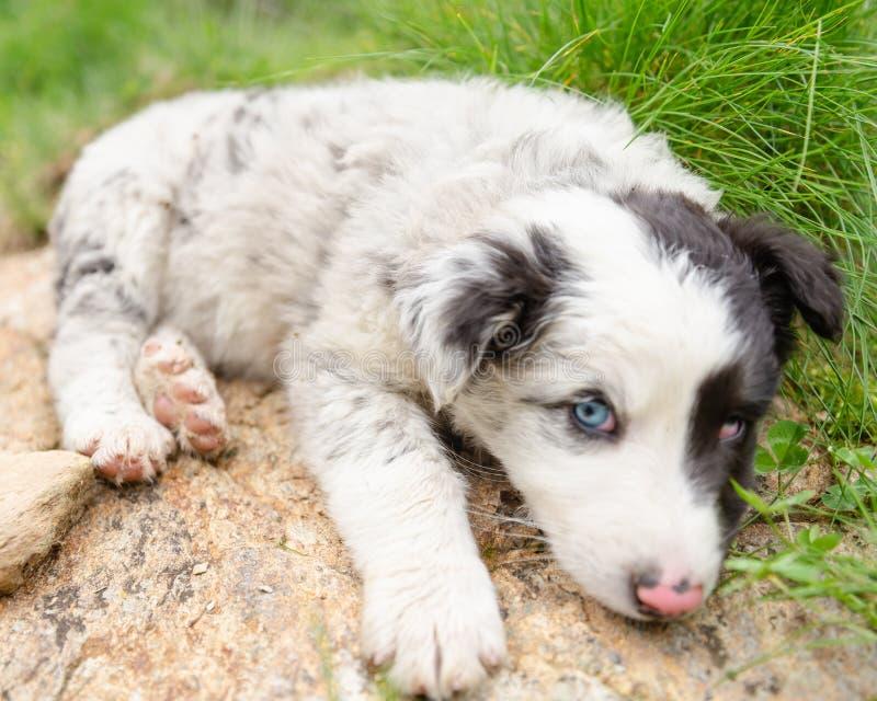 Leuke en kleine puppyhond die op liggen rotsen stock foto's