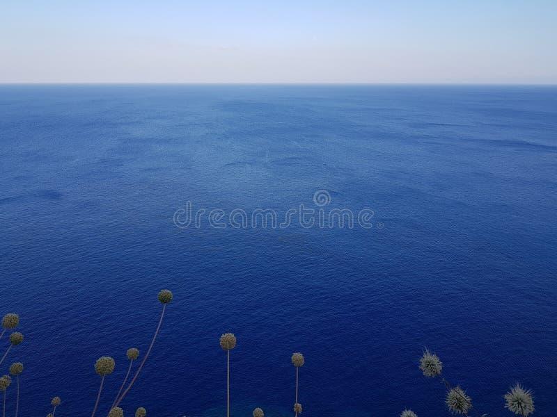 Leuke gebiedsinstallaties die tegen rustige blauwe hemel in prachtige aard groeien royalty-vrije stock foto