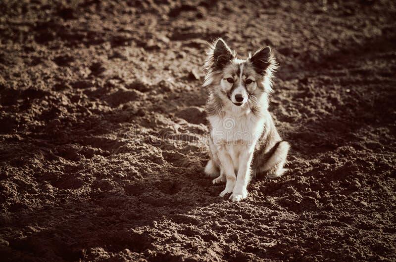 Leuke gemengde rassenhond royalty-vrije stock afbeeldingen