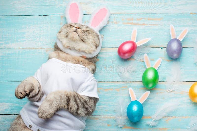 Leuke grappige mooie kat met konijnoren, Pasen-achtergrond met eieren Mening van hierboven De achtergrond van Pasen stock afbeelding