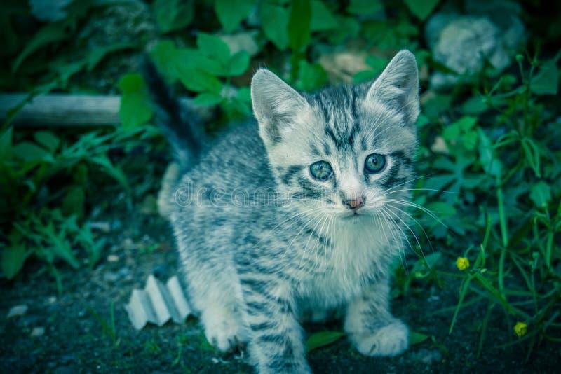 Leuke Grey Kitten Retro royalty-vrije stock foto's