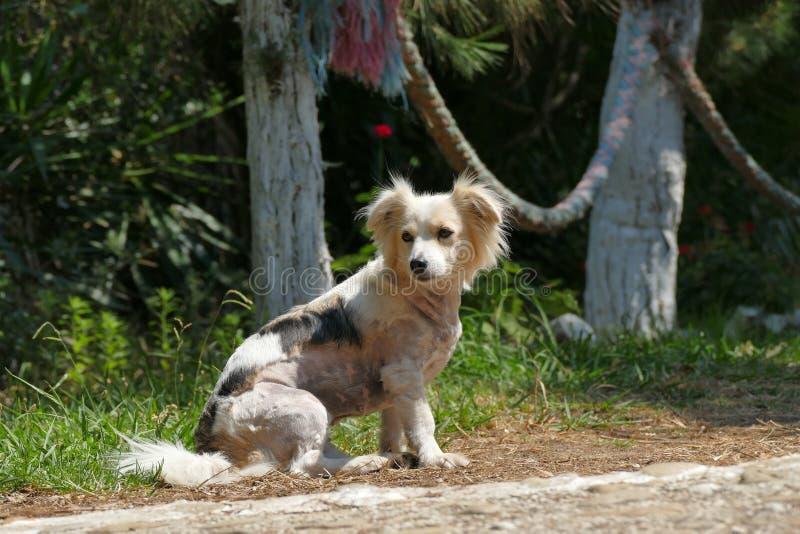 Leuke Griekse hond in een tuin royalty-vrije stock afbeeldingen