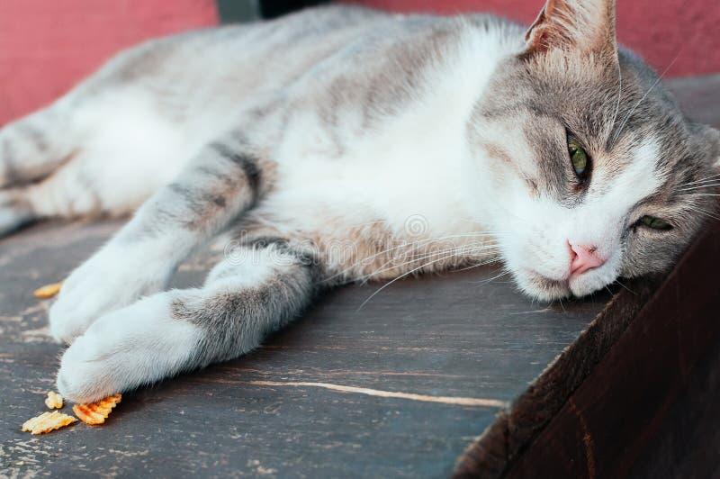 Leuke grijze straatkat die op houten lijst liggen stock afbeelding