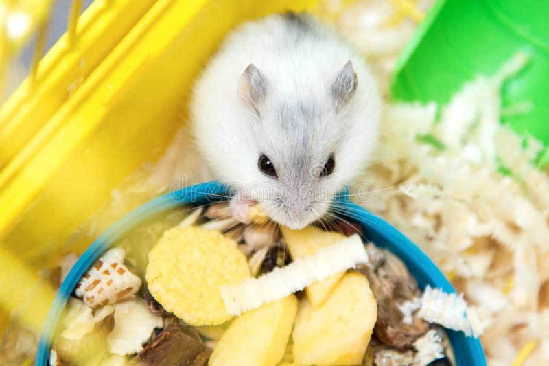 Leuke hamster die in kooi eten stock fotografie