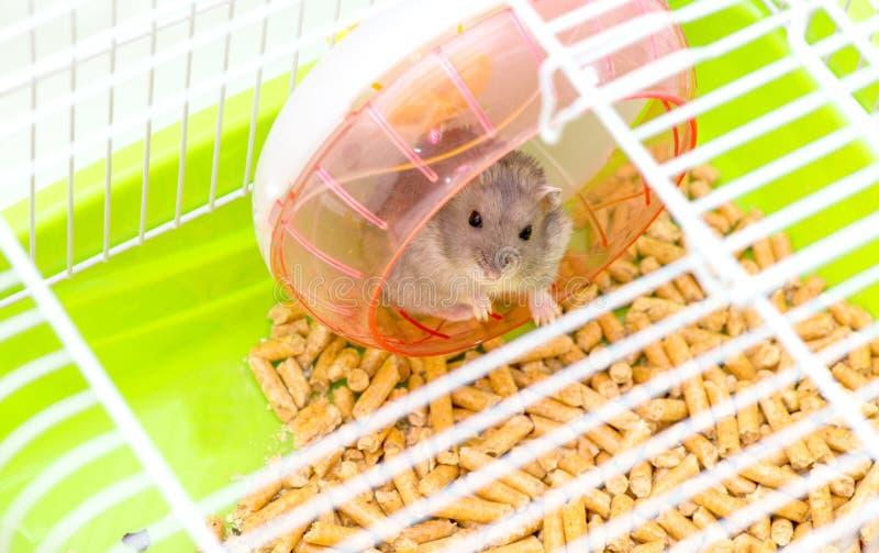 Leuke hamsterzitting in een kooi en het kijken door de roostercellen stock afbeeldingen