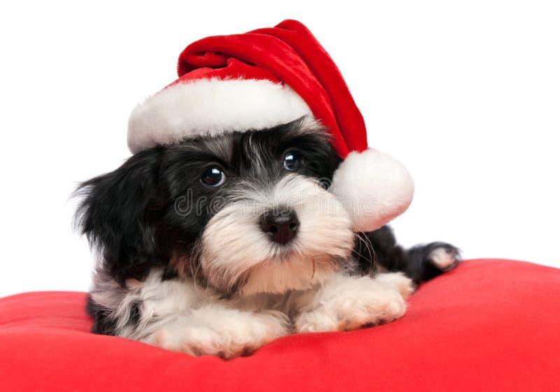 Leuke havanese het puppyhond van Kerstmis royalty-vrije stock foto