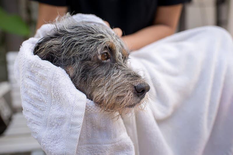 Leuke hond bij het verzorgen royalty-vrije stock foto