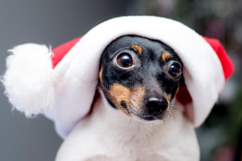 Leuke hond die de hoed van de Kerstman draagt royalty-vrije stock afbeelding