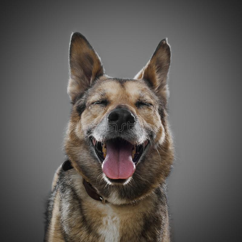 Leuke hond die op een grijze achtergrond, het symbool glimlachen van 2018 royalty-vrije stock afbeelding