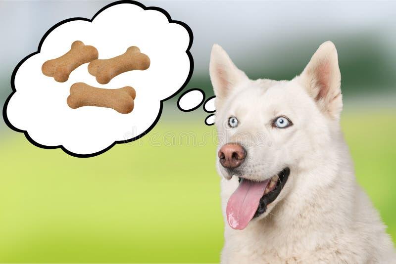 Leuke hond die over voedsel op achtergrond denken royalty-vrije stock foto's