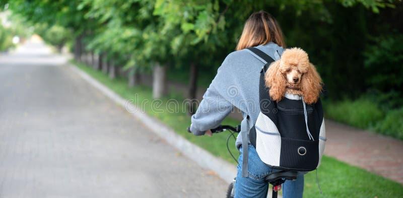 Leuke hond die van dierlijke dragende rugzak gluren royalty-vrije stock foto's