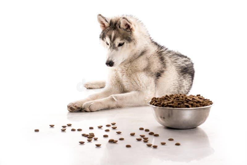 Leuke hond en zijn favoriet droog voedsel op een witte achtergrond stock foto's
