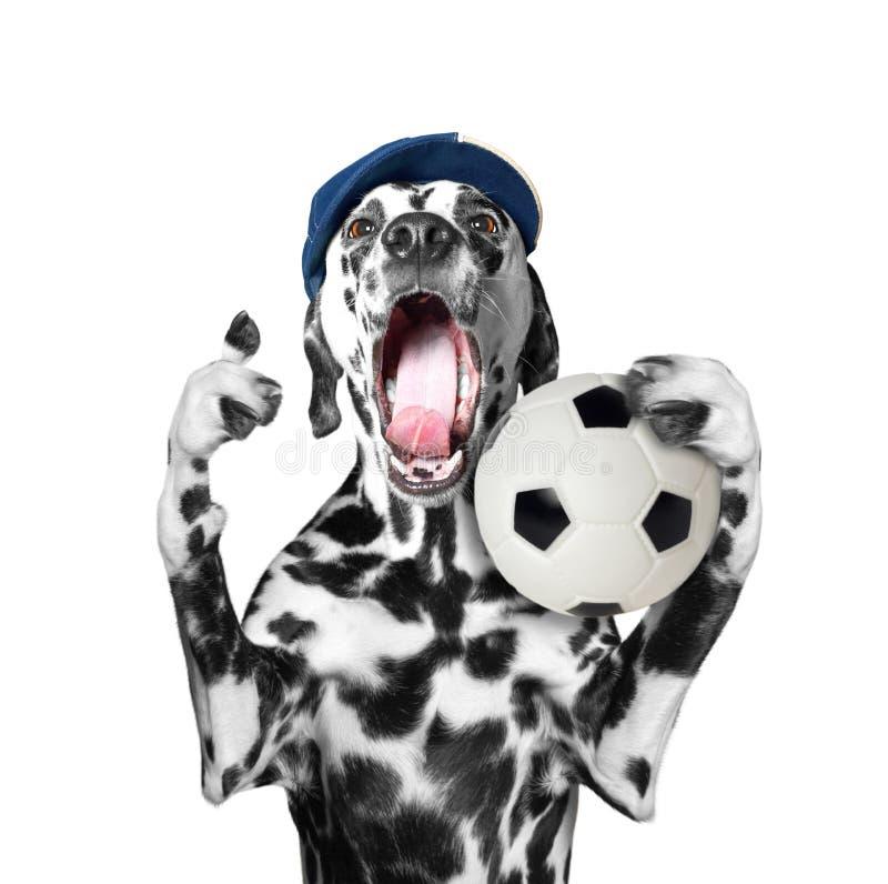 Leuke hond in GLB die een voetbalbal en een schreeuw en schreeuw houden stock foto's