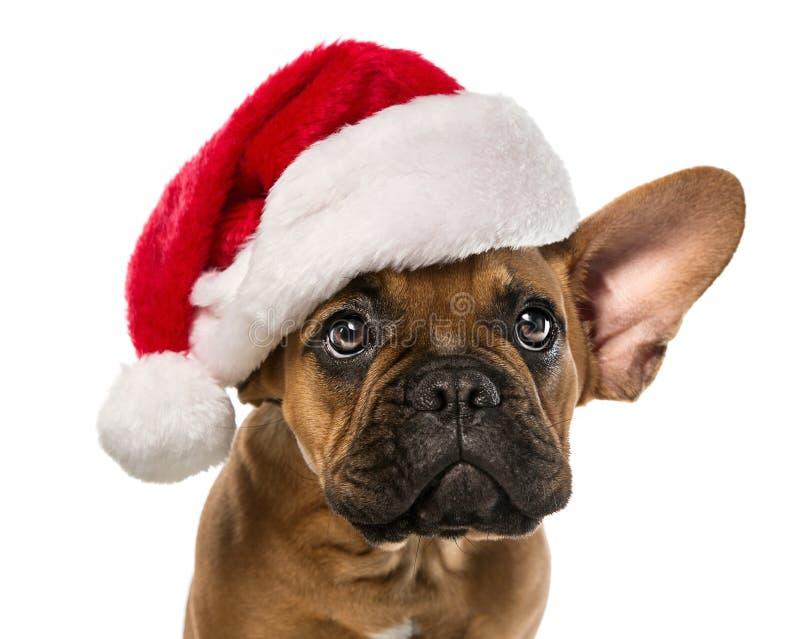 Leuke hond met de hoed van de Kerstman stock fotografie