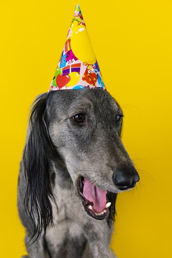 Leuke hond met een hoed van de verjaardagspartij op ge?soleerd op een gele achtergrond Windhond hoed met copyscpace de hond is bo royalty-vrije stock foto