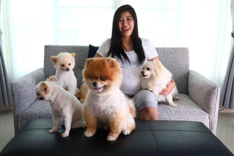 Leuke huisdieren van de vrouwen de zwangere en pomeranian hond in woonkamer stock fotografie