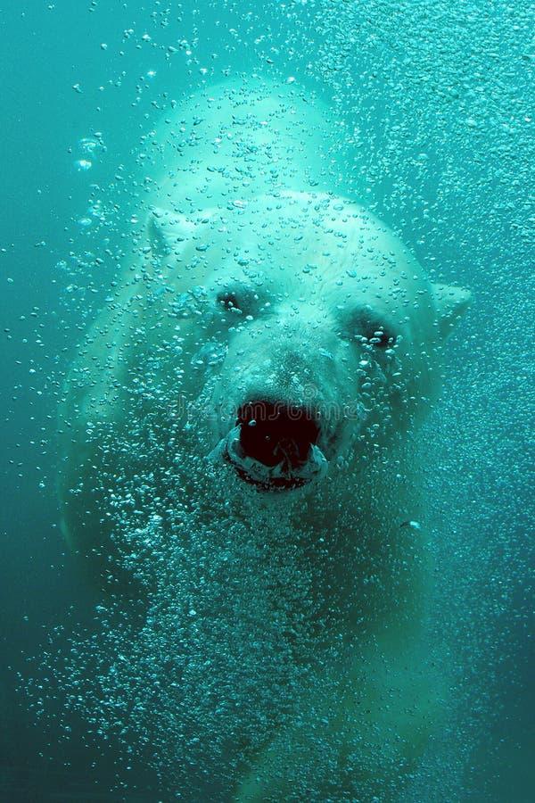 Leuke ijsbeer onderwater stock foto