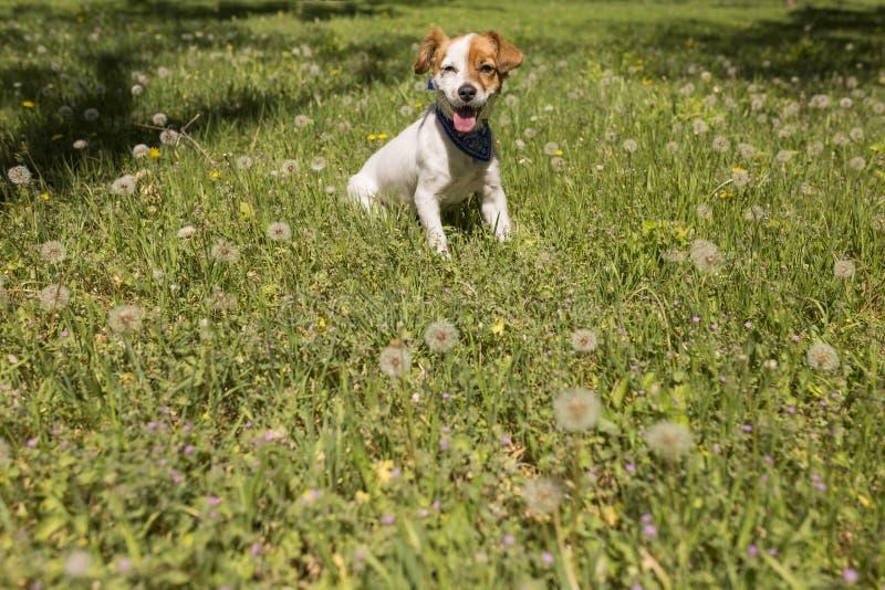 Leuke jonge hond die pret in een park hebben in openlucht De de lentetijd… nam bladeren, natuurlijke achtergrond toe Groen stock foto