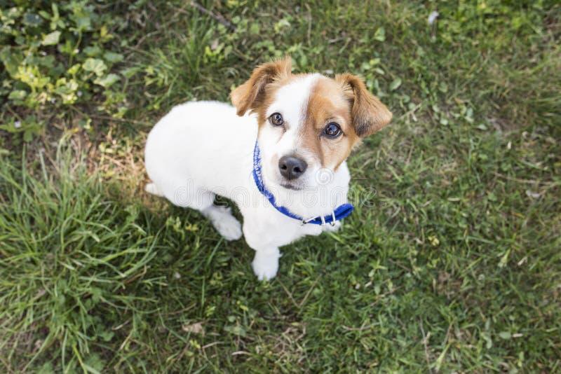 Leuke jonge hond die pret in een park hebben in openlucht lookin bij kwam royalty-vrije stock afbeelding