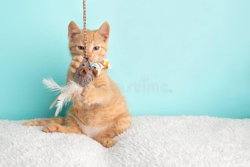 Leuke Jonge Oranje Tabby Cat Kitten Rescue Wearing White Flower-Vlinderdas die het Grappige Spelen met Koord en Muisstuk speelgoe stock foto