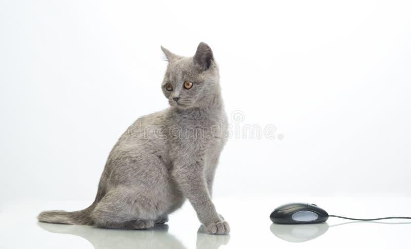 Leuke kat stock afbeelding
