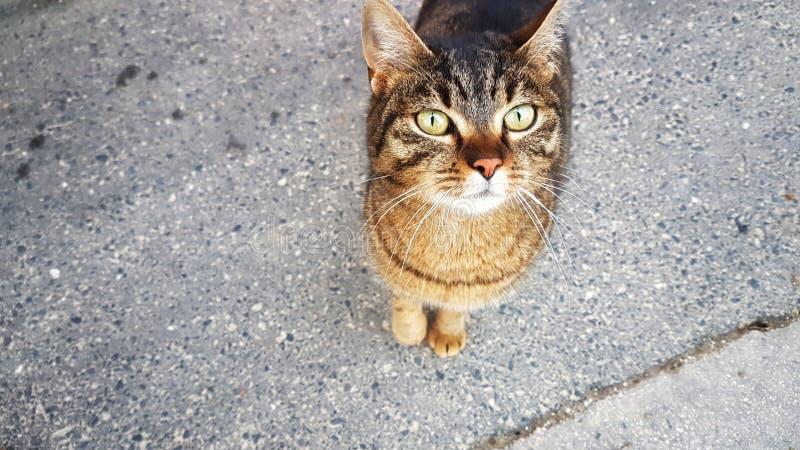 Leuke kat die me kijken stock afbeeldingen