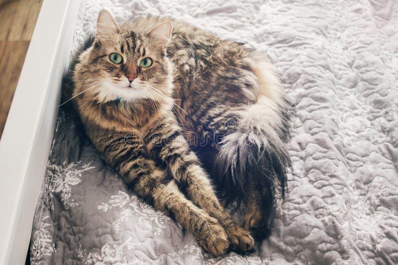 Leuke kat die op comfortabel bed in ochtendlicht in modieuze ro liggen royalty-vrije stock afbeeldingen