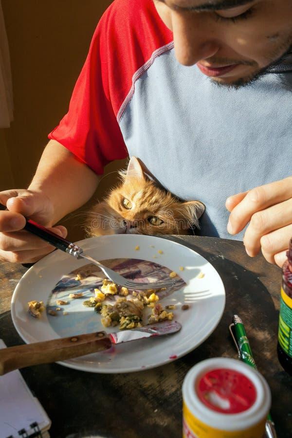 Leuke kat die voedsel van een mens bedelen royalty-vrije stock fotografie
