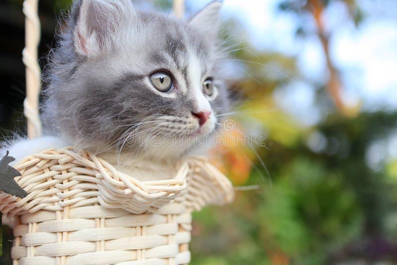 Leuke kat in emmer stock foto's