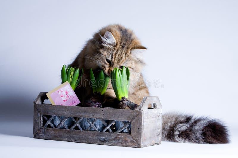 Leuke kat en een bloem royalty-vrije stock foto