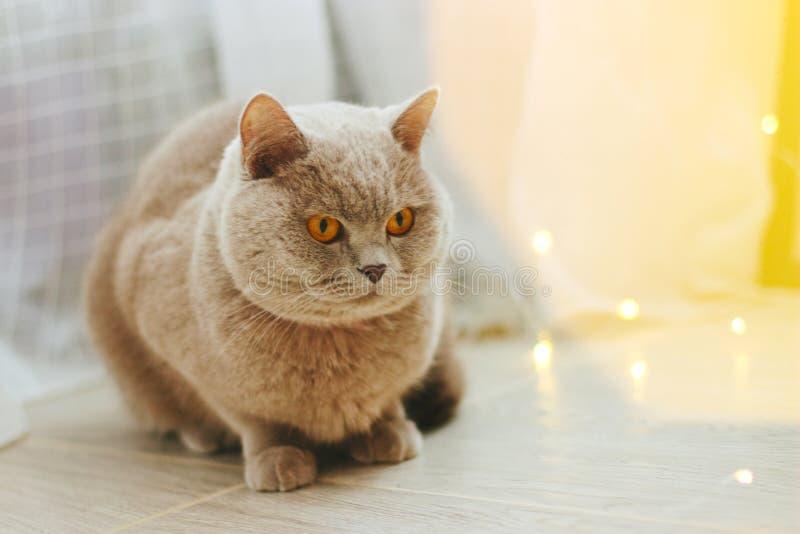 Leuke kat en vage Kerstmislichten royalty-vrije stock afbeelding