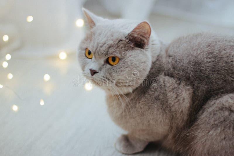 Leuke kat en vage Kerstmislichten stock foto