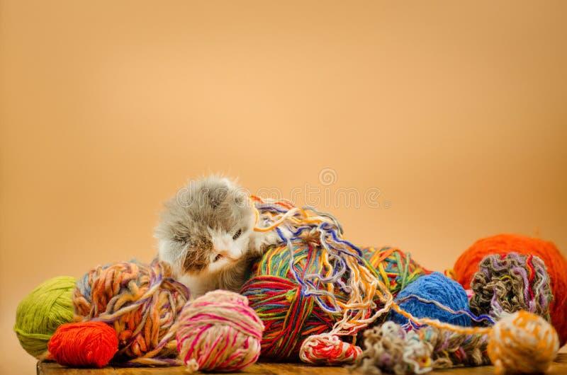 Leuke kat met de kleurrijke ballen van het wolgaren royalty-vrije stock fotografie